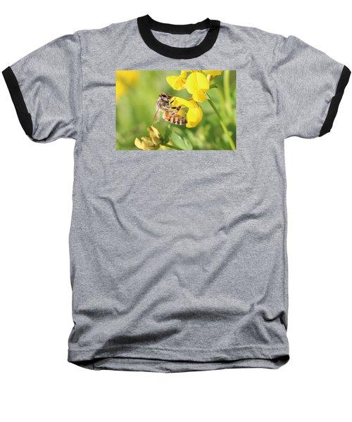 honeybee on Birdsfool Trefoil Baseball T-Shirt by Lucinda VanVleck