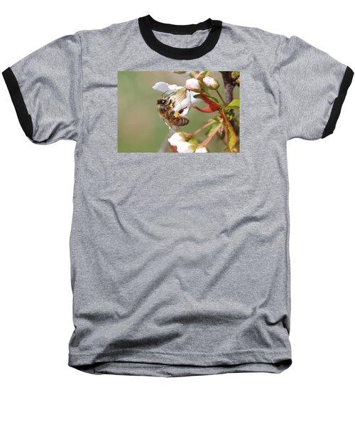 Honeybee On Cherry Blossom Baseball T-Shirt by Lucinda VanVleck
