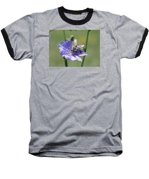 honeybee on Chickory Baseball T-Shirt by Lucinda VanVleck