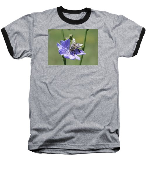 honeybee on Chickory Baseball T-Shirt