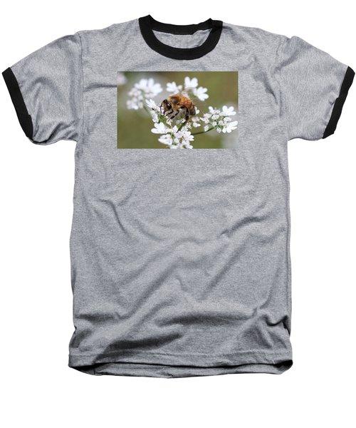 Honeybee On Cilantro Baseball T-Shirt by Lucinda VanVleck