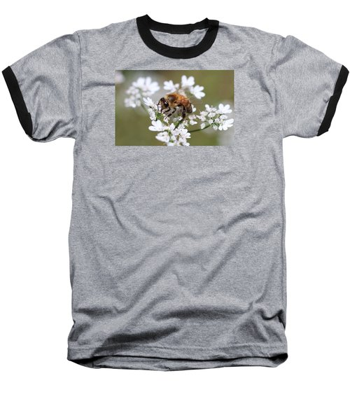 Honeybee On Cilantro Baseball T-Shirt