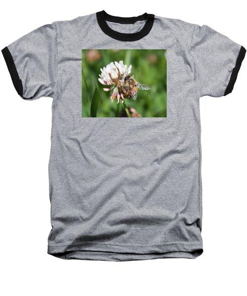 Honeybee On Clover Baseball T-Shirt by Lucinda VanVleck