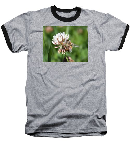 Honeybee On Clover Baseball T-Shirt
