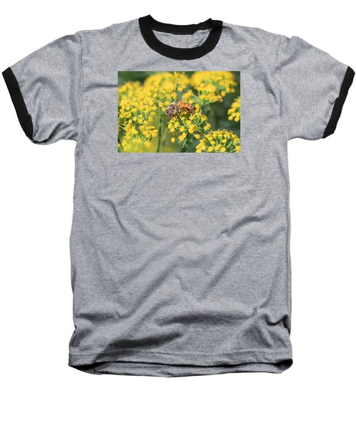 Honeybee On Dill Baseball T-Shirt by Lucinda VanVleck