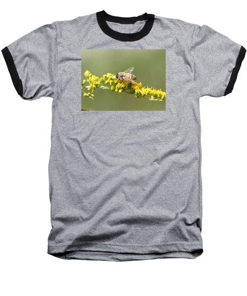 Honeybee On Goldenrod Twig Baseball T-Shirt by Lucinda VanVleck