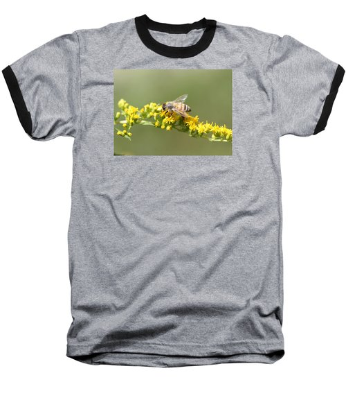 Honeybee On Goldenrod Twig Baseball T-Shirt