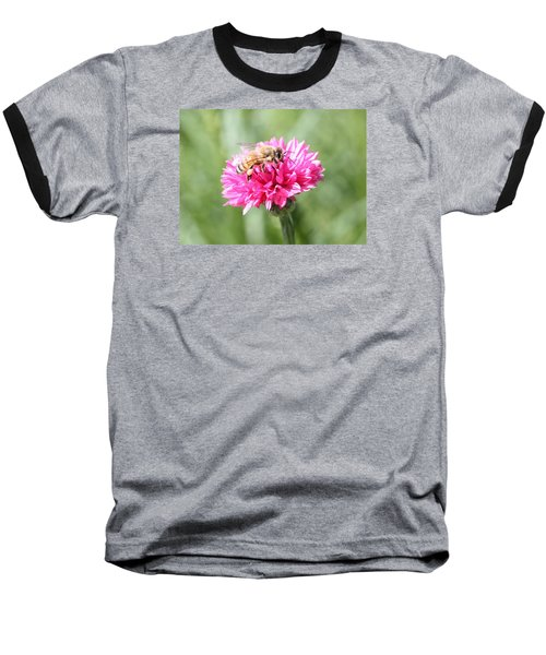 Honeybee On Pink Bachelor's Button Baseball T-Shirt by Lucinda VanVleck