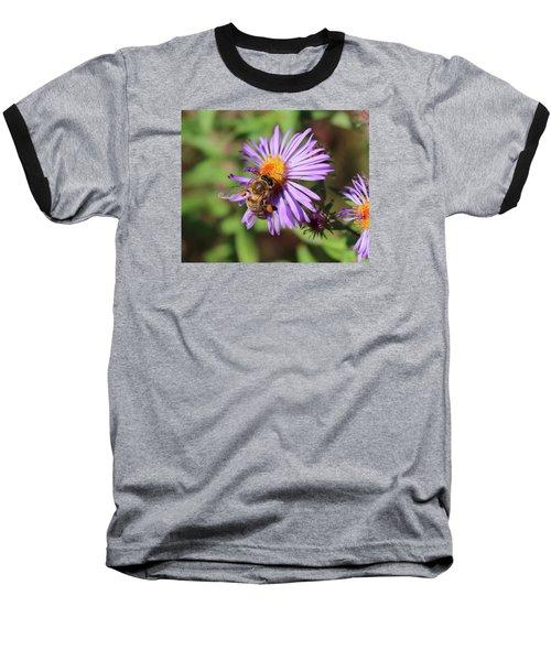 Honeybee On Purple Wild Aster Baseball T-Shirt by Lucinda VanVleck