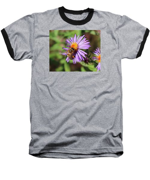 Honeybee On Purple Wild Aster Baseball T-Shirt