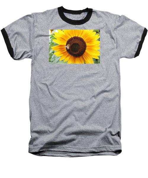 Honeybee On Small Sunflower Baseball T-Shirt by Lucinda VanVleck