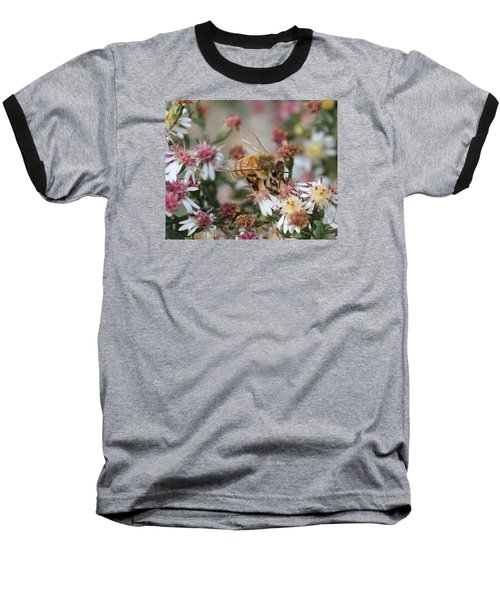 Honeybee Sipping Nectar On Wild Aster Baseball T-Shirt by Lucinda VanVleck