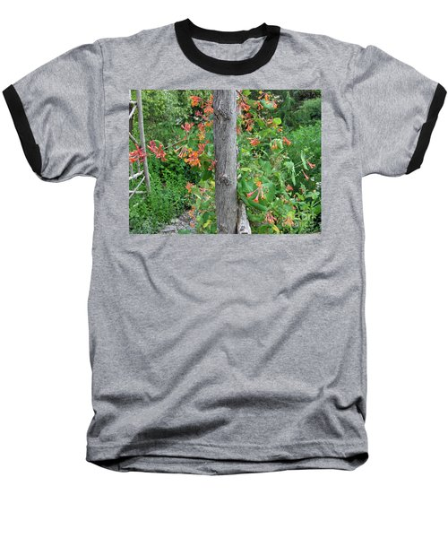 Honeysuckle's Friend Baseball T-Shirt by Brenda Brown