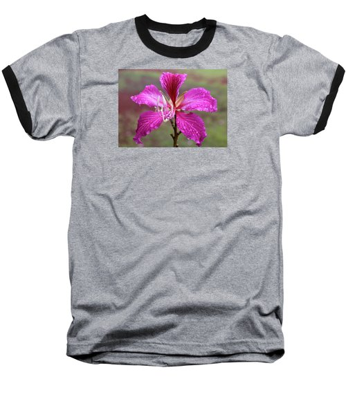 Hong Kong Orchid Tree Flower Baseball T-Shirt by Venetia Featherstone-Witty