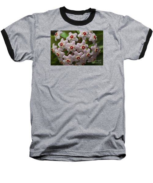 Hoya Waxflower Baseball T-Shirt