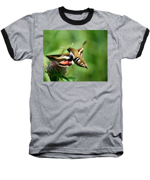Hummingbird Moth From Behind Baseball T-Shirt