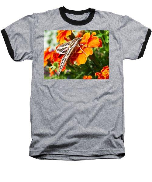 Hummingbird Moth On A Marigold Flower Baseball T-Shirt by Nadja Rider