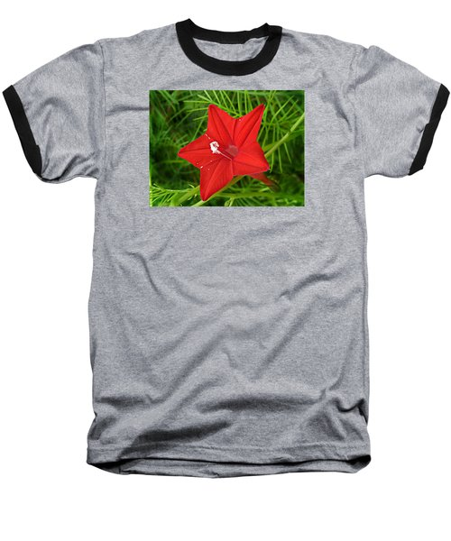 Hummingbird Vine Baseball T-Shirt by William Tanneberger