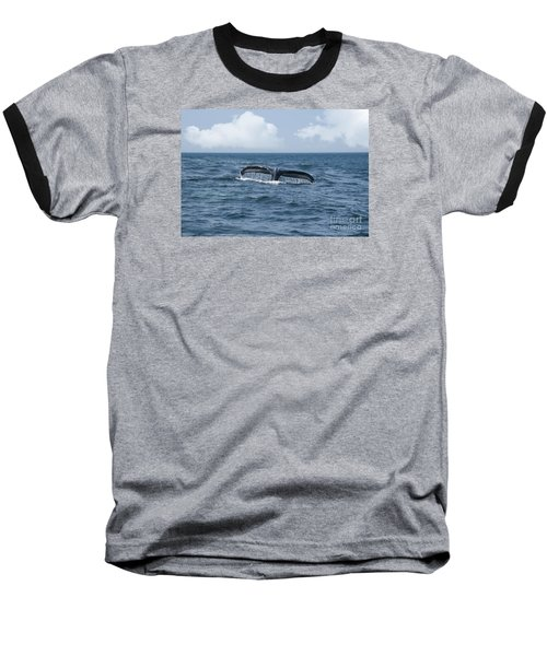 Humpback Whale Fin Baseball T-Shirt by Juli Scalzi