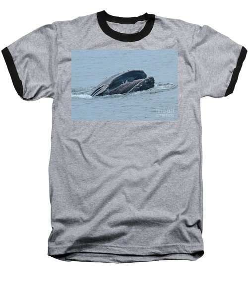 Baseball T-Shirt featuring the photograph Humpback Whale  Lunge Feeding Monterey Bay 2013 by California Views Mr Pat Hathaway Archives