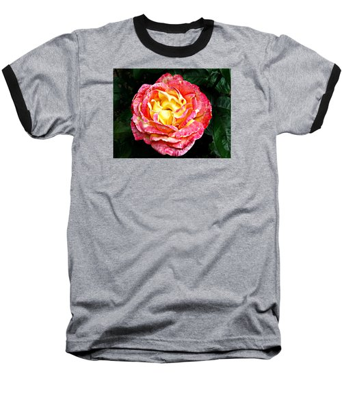 Baseball T-Shirt featuring the photograph Hybrid Tea Rose ' Love And Peace ' by William Tanneberger