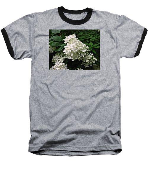Hydrangea Arborescens ' Annabelle ' Baseball T-Shirt by William Tanneberger