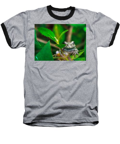 Hyla Versicolor Baseball T-Shirt by Rob Sellers