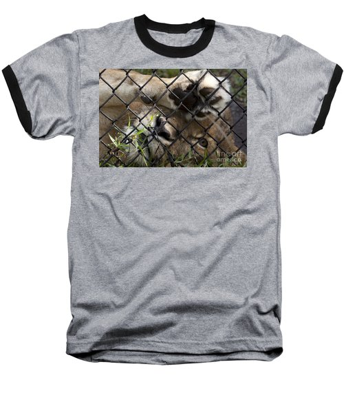 I Want To Go Home - Female African Lion Baseball T-Shirt