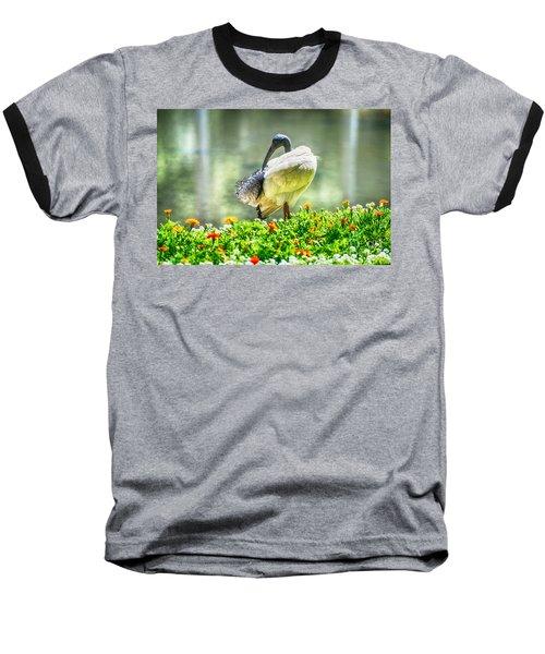 Ibis  Baseball T-Shirt
