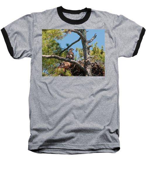 Immature Bald Eagle Baseball T-Shirt by Brenda Jacobs