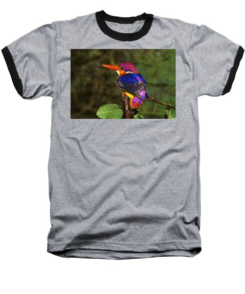 India Three Toed Kingfisher Baseball T-Shirt by Anonymous