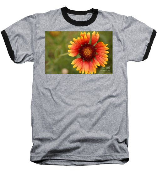 Indian Blanket Flower Baseball T-Shirt