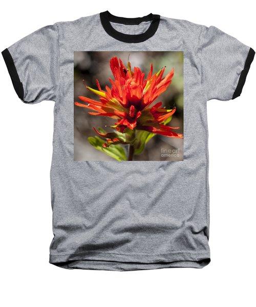 Baseball T-Shirt featuring the photograph Indian Paintbrush by Belinda Greb