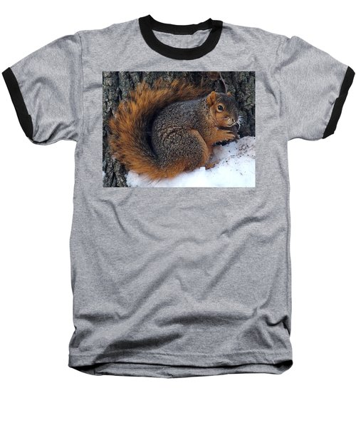 Indiana Squirrel In Winter With Nut Baseball T-Shirt