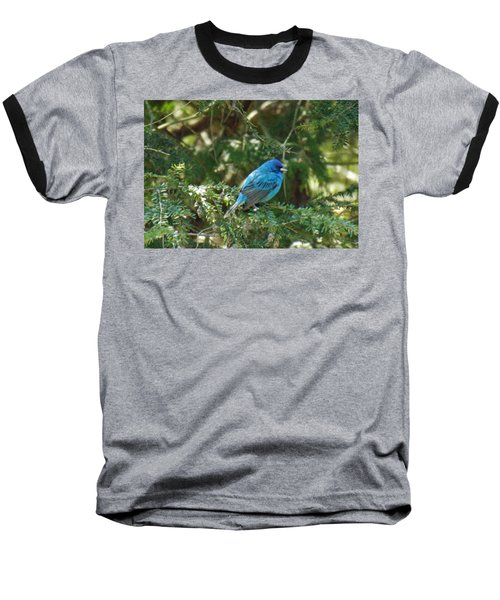 Indigo Bunting Visit Baseball T-Shirt by Brenda Brown