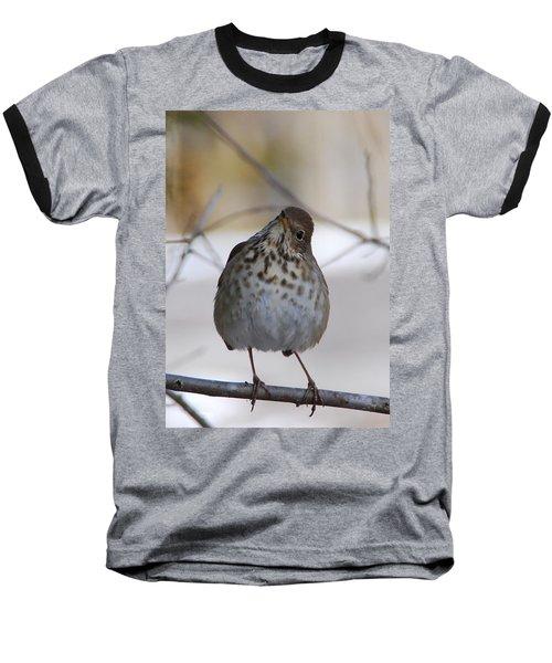 Inquisitive Hermit Thrush Baseball T-Shirt