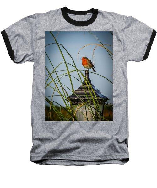 Irish Robin Perched On Garden Lamp Baseball T-Shirt