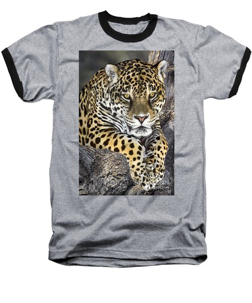 Jaguar Portrait Wildlife Rescue Baseball T-Shirt by Dave Welling