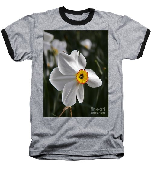 Jonquil Baseball T-Shirt by Judy Via-Wolff