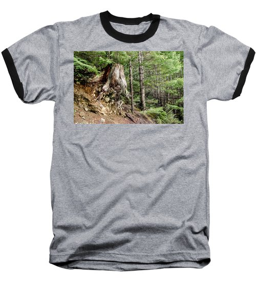 Just Hanging On Old Growth Forest Stump Baseball T-Shirt by Roxy Hurtubise