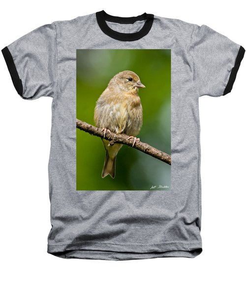 Juvenile American Goldfinch Baseball T-Shirt by Jeff Goulden