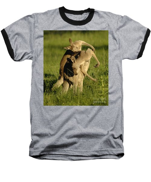 Kangaroos Taking A Bow Baseball T-Shirt by Bob Christopher