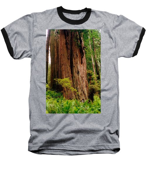 Kevin And The Big Tree - Redwood National Forest Baseball T-Shirt