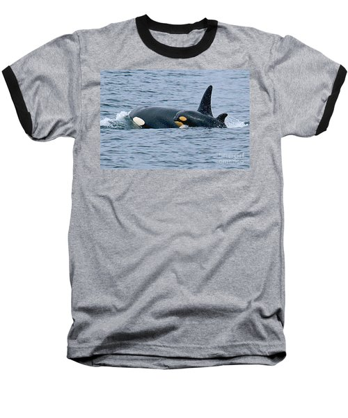 Baseball T-Shirt featuring the photograph Killer Whale Mother And New Born Calf Orcas In Monterey Bay 2013 by California Views Mr Pat Hathaway Archives