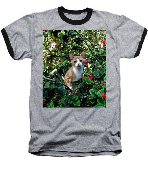 Kitten Baseball T-Shirt by Pamela Walton