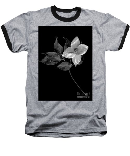 Kousa Dogwood In Black And White Baseball T-Shirt
