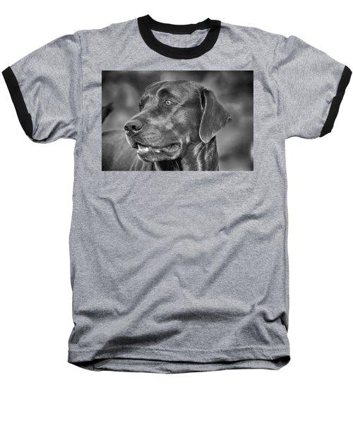 Labrador Sweetie Baseball T-Shirt