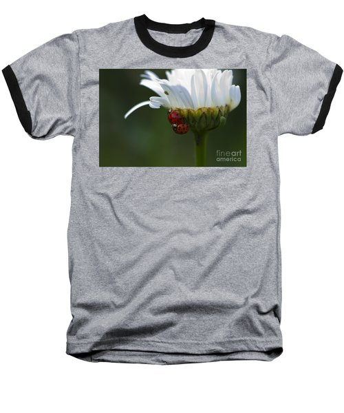 Ladybugs On Shasta Daisy Baseball T-Shirt