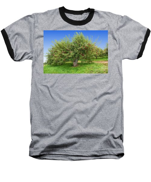 Large Apple Tree Baseball T-Shirt