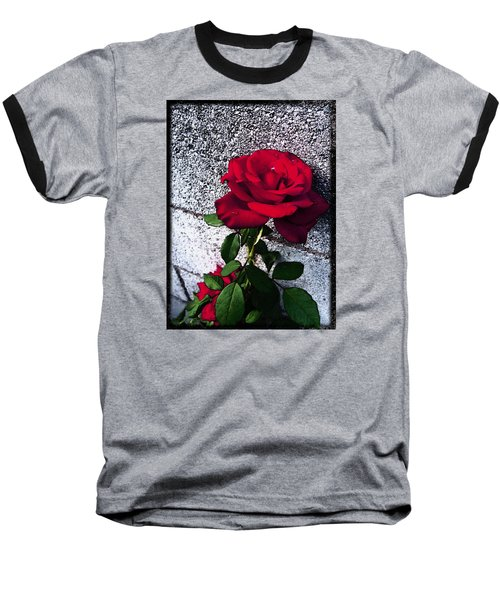 Baseball T-Shirt featuring the photograph Late Summer Rose by Shawna Rowe